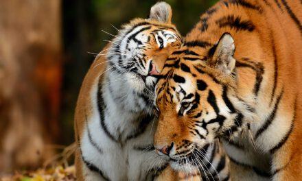 Tierpark Hellabrunn: Auf ins Abenteuer