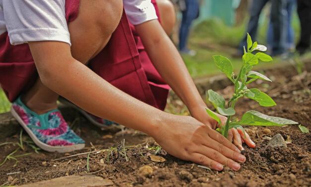 Urban Gardening mit Kids